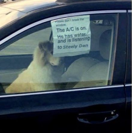 dog-in-car-sign-picture-475x480